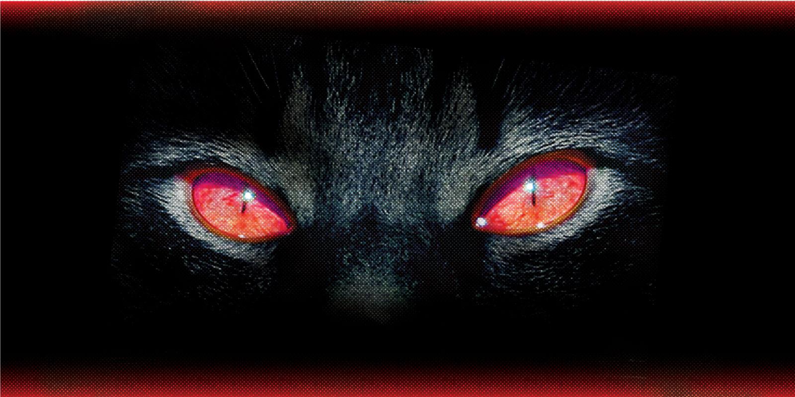 Olhos de ver
