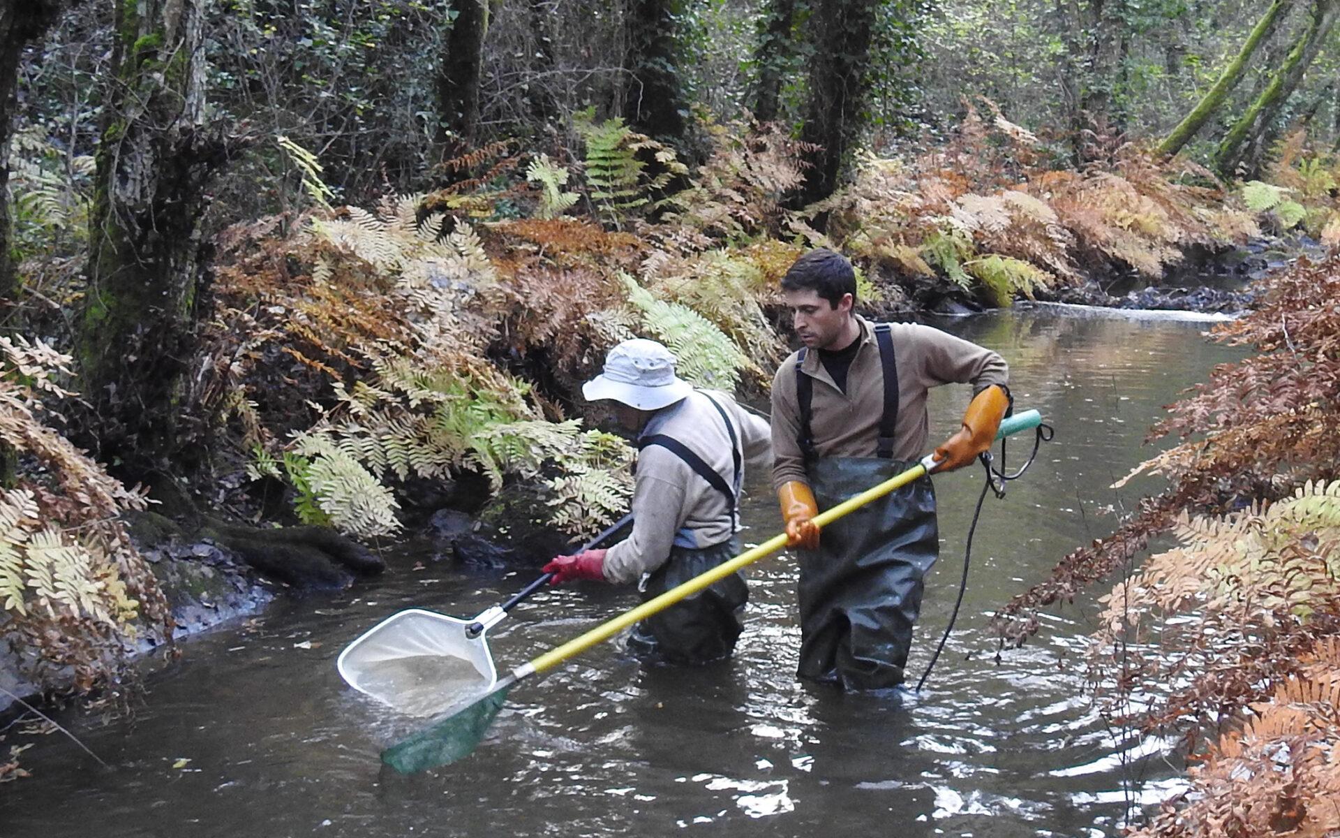 Atividade de monitorização também conhecida como pesca elétrica