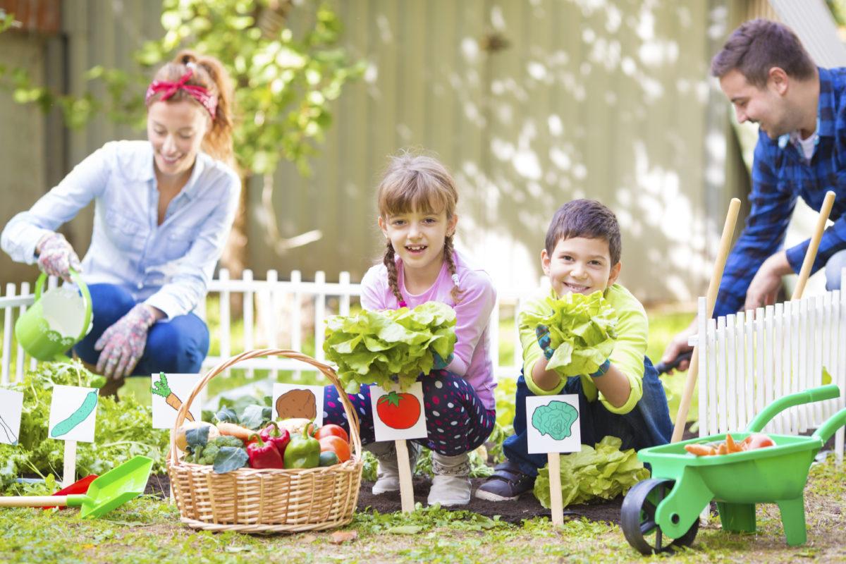 Mini-horta em casa: produtos frescos diretamente para a mesa