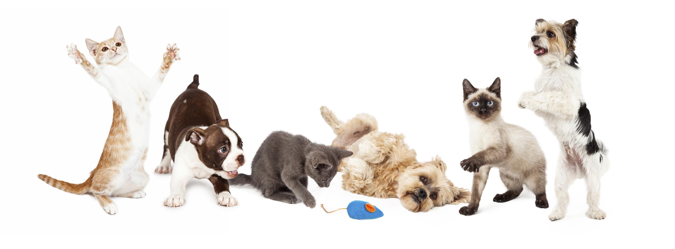 Cães e gatos, a chave para viver mais e melhor