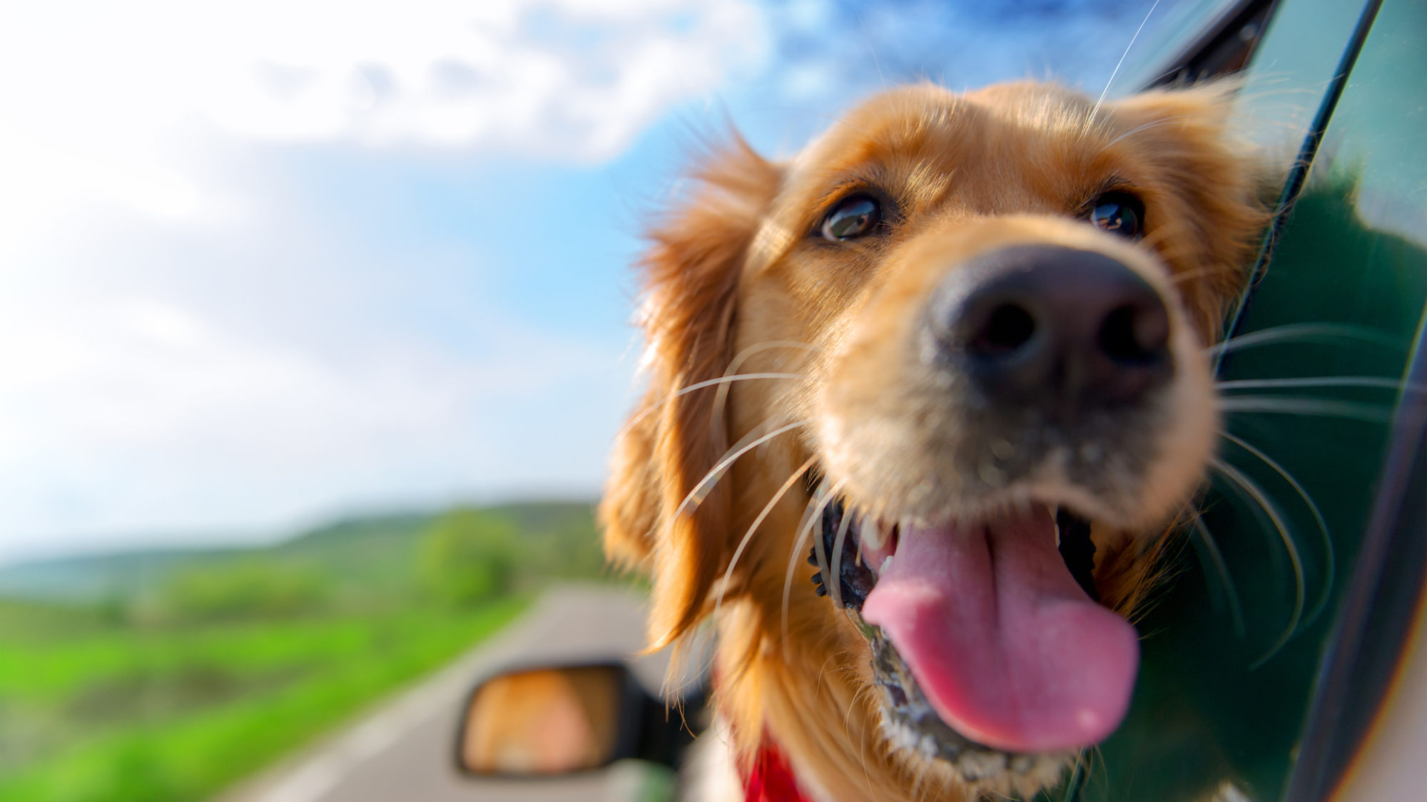 De carro com o seu cão ou gato: como proceder