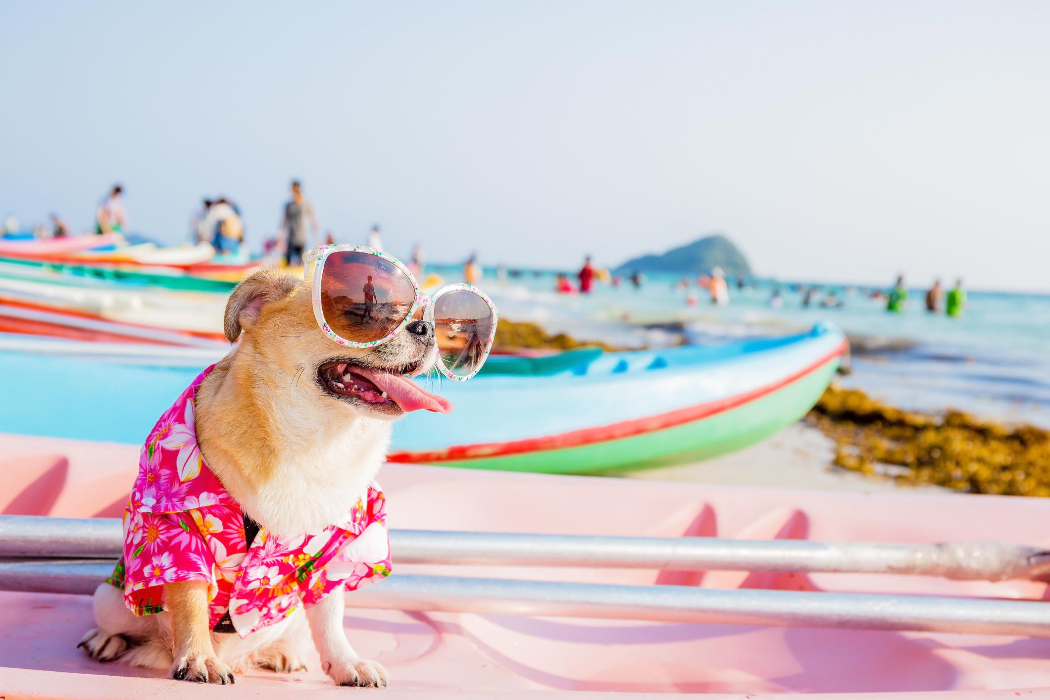 De férias sem o seu animal de companhia