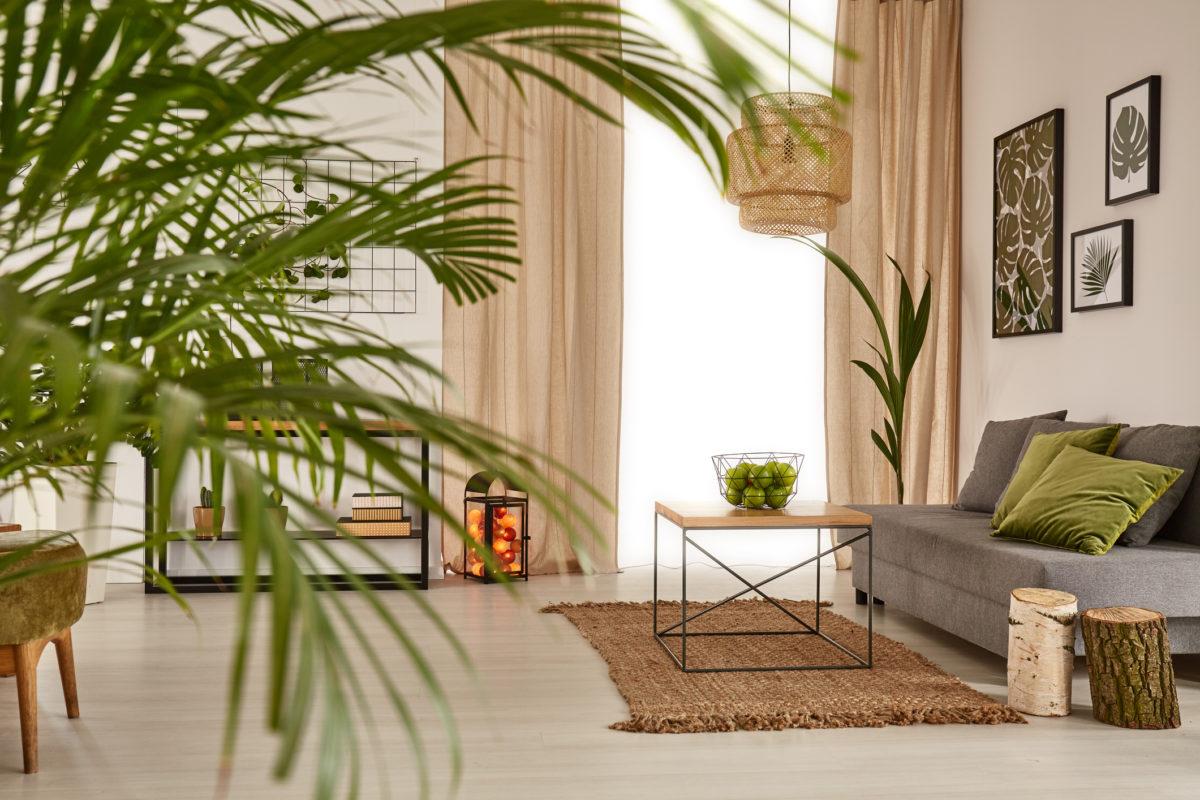 Plantas resilientes: dê mais verde à sua casa sem esforço