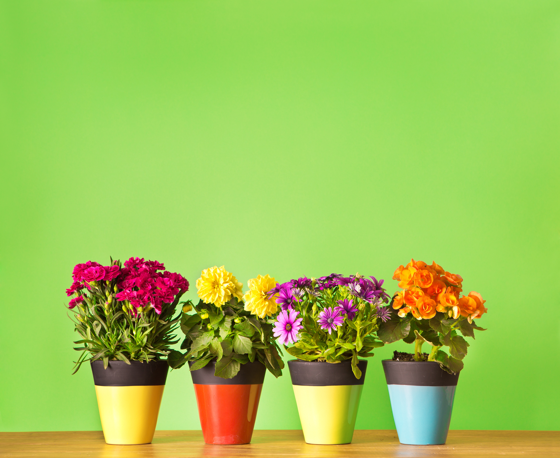 Rega no verão, cuidados para manter as plantas no seu melhor