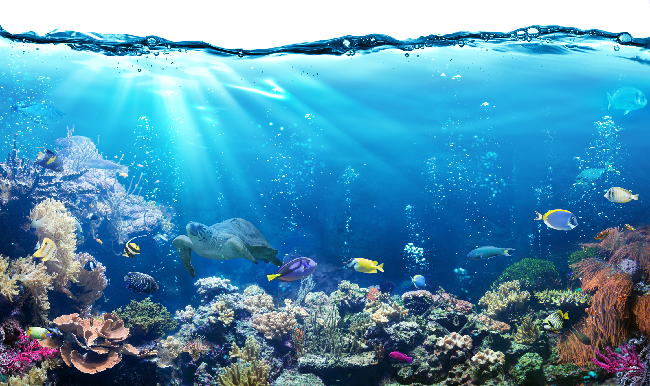 O que juntos podemos fazer para preservar os oceanos