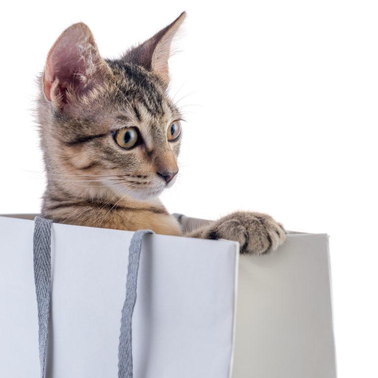 Na pista do seu patudo – rastreadores para cães e gatos