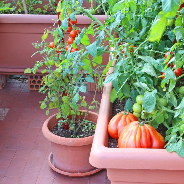 Comece o ano a plantar e colha os benefícios