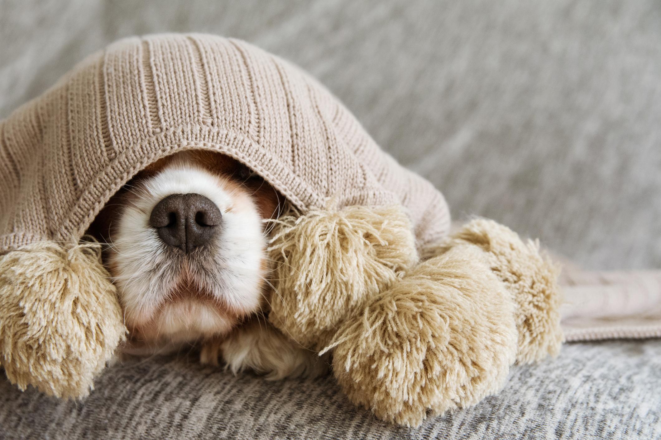 SOS animal: o que precisa no seu estojo de primeiros socorros